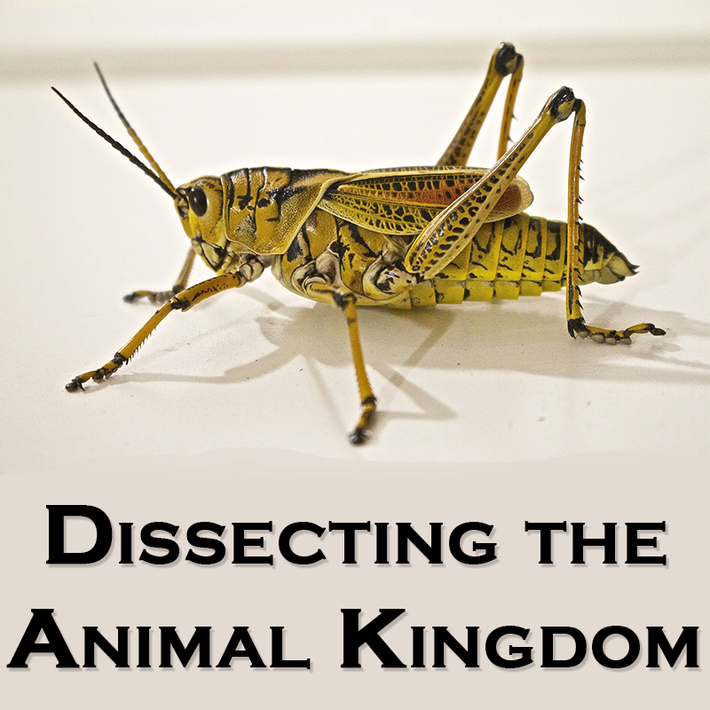 Dissecting the Animal Kingdom